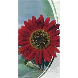 Семена подсолнуха декоративного Красное Солнышко