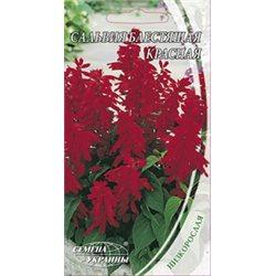 Семена сальвии блестящей Красный гном