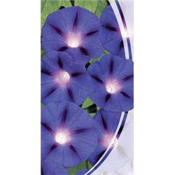 Семена ипомеи Синяя звезда