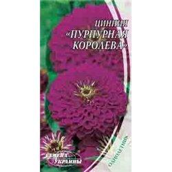 Семена циннии Пурпурная королева