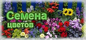 Купить семена цветов